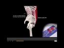 ПРЕСС 3 ЭФФЕКТИВНЫХ упражнения Мышцы стабилизаторы БИОМЕХАНИКА