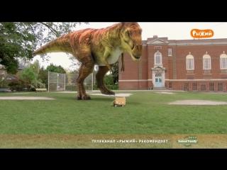 Дино Дэн - 07. Птерозавр в доме