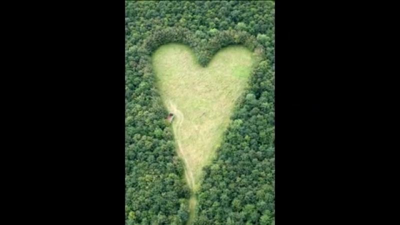 Вдовец создал сердечную поляну в лесу. В память о жене