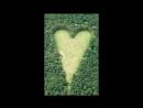 Вдовец создал сердечную поляну в лесу В память о жене