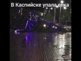 В Каспийске на площади упала елка [Нетипичная Махачкала]
