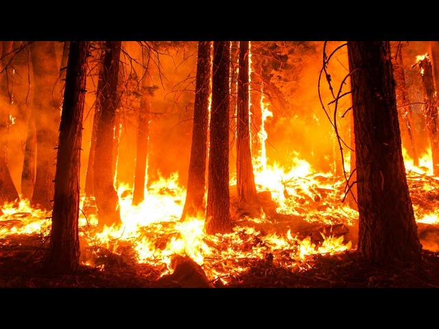 🎧 Wildfire Sound Effect -|- 8 Hours, Sleep, Relax, Meditate, Ambience sound, white noise