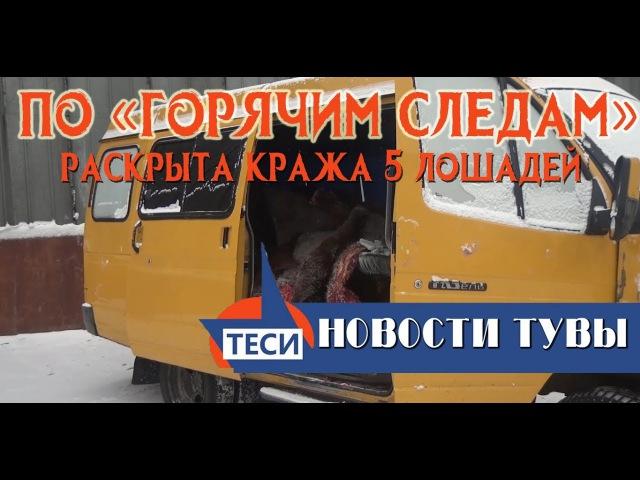 НОВОСТИ ТУВЫ - Неизвестные похитили пять лошадей - 16.01.2018