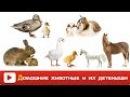 ДОМАШНИЕ ЖИВОТНЫЕ и их ДЕТИ - Как ГОВОРЯТ животные - Развивающее ВИДЕО домашние ж...
