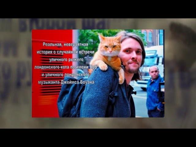Буктрейлер по книге Дж. Боуэна уличный кот по имени Боб