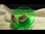 Space Hamsters Traning