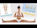 Как сесть на поперечный ШПАГАТ за 10 минут. Что? | Анатомия