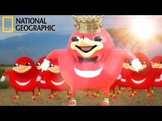 Ugandan Knuckles | Wildlife Documentary