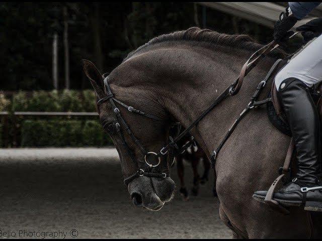 ~ Конный спорт ~ AJR ~ Equestrian sport ~