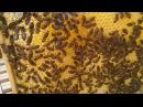 UTV. К Апимондии в Башкирии может не остаться пчел