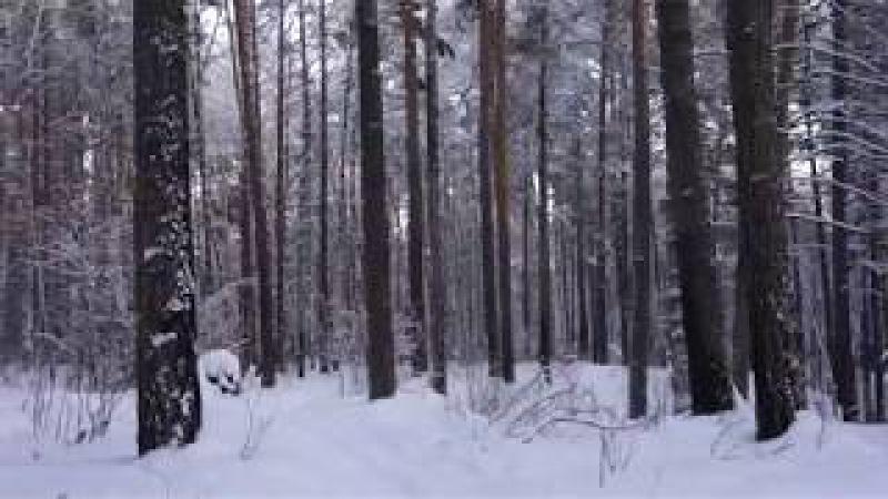 Лес . Сегодня . Возвращение . Дорога домой . В зимнем лесу .