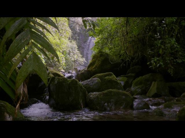 Кинематограф Энрике Пачеко берет нас в увлекательное путешествие по пышным пей ...