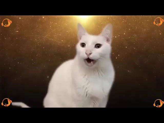 Деспасито по кошачий