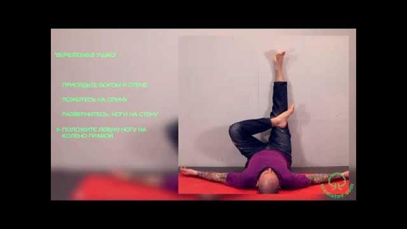 3 упражнения из программы 2-го дня «Нового Древа» для оздоровления спины. Алексей Маматов