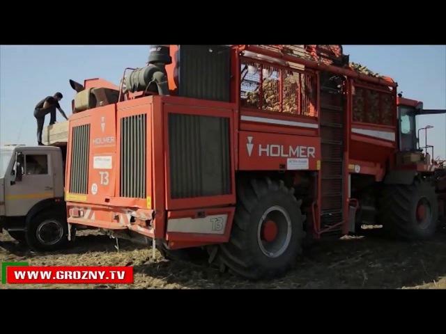 В Чечне продолжается уборка урожая