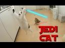 Ultimate Compilation Cat Jedi 2016