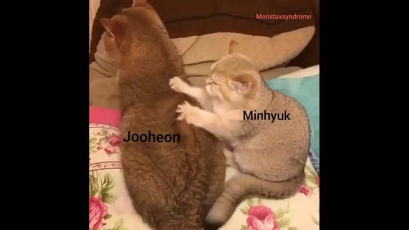 JooHyuk like a Cats| Monsta X | Jooheon Minhyuk | 2Lee | JooMin | HoneyPup [31]
