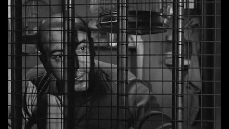 Любитель птиц из Алькатраса 1962 Birdman of Alcatraz 1962