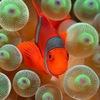 Морская аквариумистика  Интернет магазин