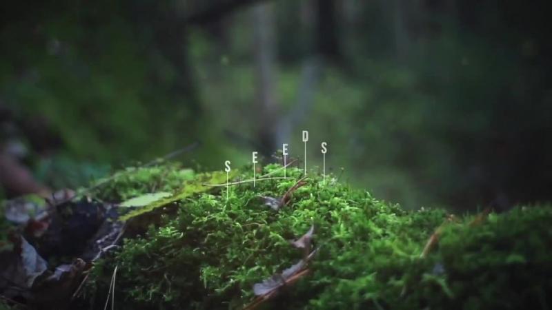 Источник жизни и питания - семена - Rain International