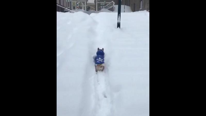 Бодрость и уверенность в покорении снежных просторов!