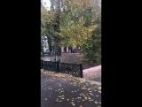 Листья жёлтые над городом кружатся))))