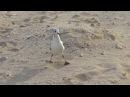 Ну очень деловая птичка! Видео для релакса и отличного настроения!