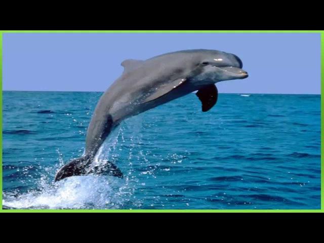 2 efeito sonoro do som de golfinho sound effect dolphin sound 音效海豚音