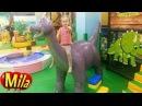 Динозаврики, Может Вы Попрятались в Африке! Детская Песня про Динозавров ♫ Игровая Комната Динотопия