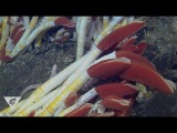 Extreme worms Specialized seafloor polychaetes