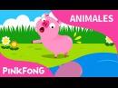 ¿Tú Has Visto Mi Colita?   Animales   PINKFONG Canciones Infantiles