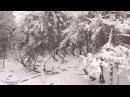 Танцующий лес. Видео с квадрокоптера. Массив 1.