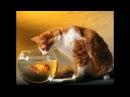 ПРИКОЛЫ С ЖИВОТНЫМИ подборка смех до слез 2017 Funny Cats 47