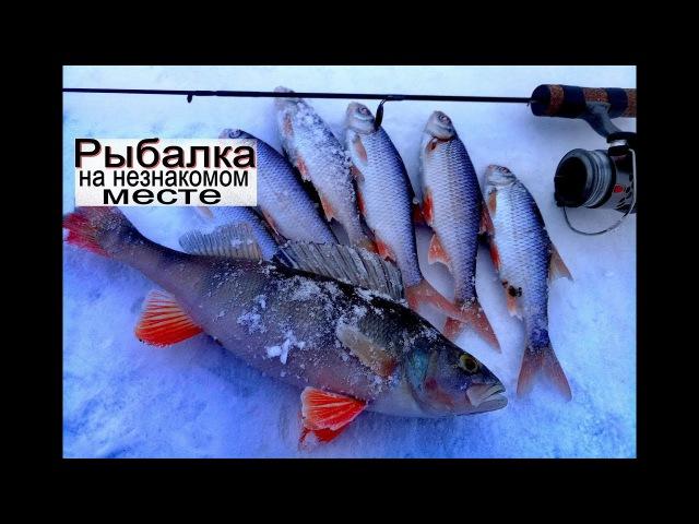 зимняя рыбалка на неизвестном месте. Ловля на мормышку плотвы и окуня с прикормк...