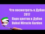 Что посмотреть в Дубае 2017Парк цветов в ДубаеУдивительный ДубайDubai Miracle Garden 2017-2018