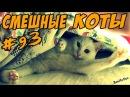 Приколы про кошек и котов Смешные кошки Видео коты ТОПовая ПОДБОРКА 2017 Funny Cats Compi...