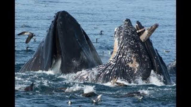 Самые страшные кадры со всего мира с китами и акулами. Footage with whales and sharks.