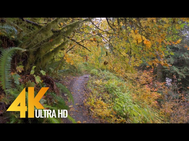 Autumn Forest Walk in 4K | 2.5 HRS Nature Video with Nature Sounds and Birds Signing
