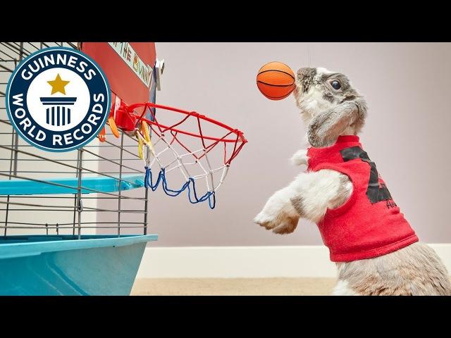 Гиннесс. Мировые рекорды – кролик-баскетболист