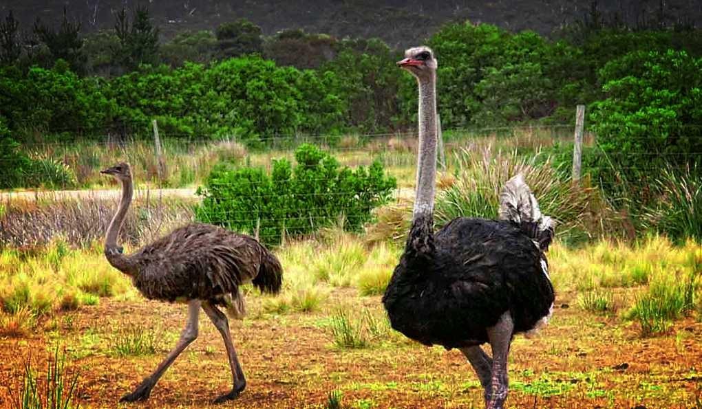 Идея бизнеса страусиная ферма знаменитые бизнес идеи