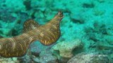 Swimming Flatworm, Yawning Lionfish and a Cuttlefish Changing Colour