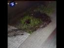 Наглые воры похитили ель и тую под покровом ночи