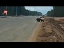 Редкие кадры: очевидец запечатлел на видео медведицу и медвежат в Подмосковье