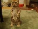 Кот из шрека!.vk