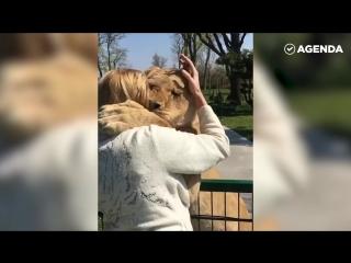 Львиная преданность