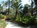 Эльче, сад Huerto Del Cura