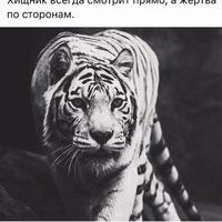 Анкета Нутелла  Александрович