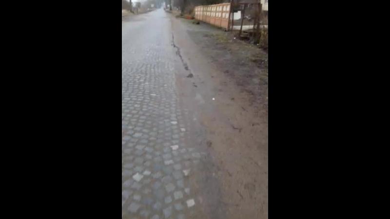 Ваня Виноградский - Live