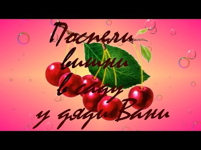 Поспели вишни в саду у дяди Вани | Макар | Куртамыш | Cherries in the garden of Uncle Vanya rushed