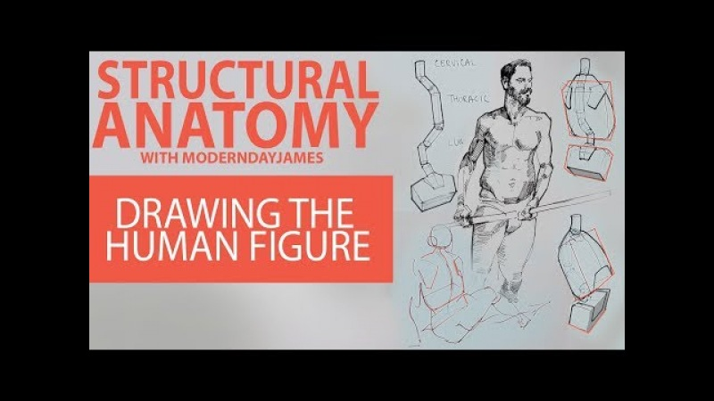 STRUCTURAL ANATOMY: Drawing the Human Figure